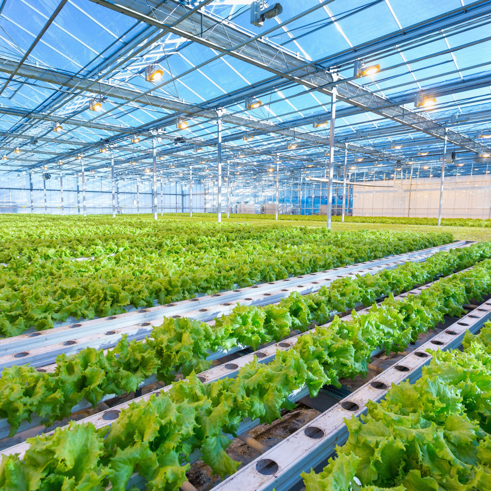 Industrial Greenhouse and Lighting